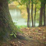 Ładny oraz {zadbany zieleniec to nie lada wyzwanie, przede wszystkim jak jego pielęgnacją zajmujemy się sami.